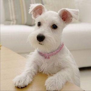 Jewelry - 🎉Host pick🎉NEW. S/M/L silver pink dog collar💕